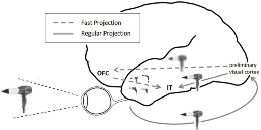 Framework for top-down visual processing. LSF information is rapidly projected from preliminary occipital visual areas to the OFC. Based on this rudimentary display, predictions are formed and projected downwards to IT regions, where they coincide with the slower ventral visual stream of processing and facilitate recognition. In this illustration, an image of hairdryer supposedly prompts predictions of a drill, a gun, a hairdryer and a boomerang.