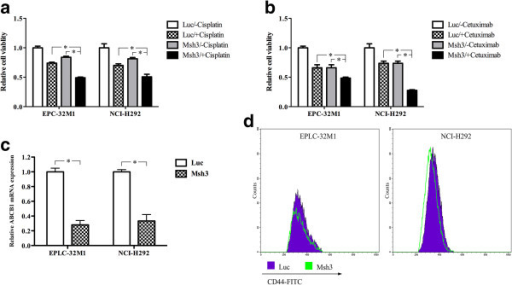 The drug resistance and generation of CD44+CSC-like cells in cultured NSCLC cells after MCRS1 silencing. (a) Assessment of the viability of EPLC-32 M1 and NCI-H292 cells after cisplatin treatment for 72 h. (b) Assessment of the viability of EPLC-32 M1 and NCI-H292 after cetuximab treatment for 72 h. (c) The expression of ABCB1 mRNA after MCRS1 depletion. (d) Flow cytometric analysis of CD44 expression in EPLC-32 M1 and NCI-H292 cells with or without MCRS1 knockdown. Luc: cells without MCRS1 silencing; Msh3: cells with stable MCRS1 silencing. *P <0.05 (one-way ANOVA and Student's t-test).