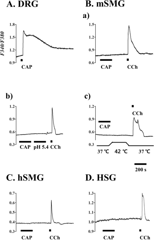 Calcium response to capsaicin in salivary gland epithelial cells (SGEC). [Ca2+]i responses induced by capsaicin (CAP) in mouse dorsal root ganglion (DRG) (A), mSMG (B), hSMG (C), and HSG cells (D). (A) CAP 1 µM in DRG as positive control. (B) CAP 10 µM (a), acidic solution with pH 5.4 (b), and hot temperature of 42℃ (c) in the acinar cells from mSMG. CAP 10 µM in the acinar cells from hSMG (C) and HSG cells (D). It is of note that 10 µM carbachol (CCh) applied at the end of each experiment consistently increased [Ca2+]i. Data for each trace were obtained from ≥30 cells in at least 5 separate experiments.