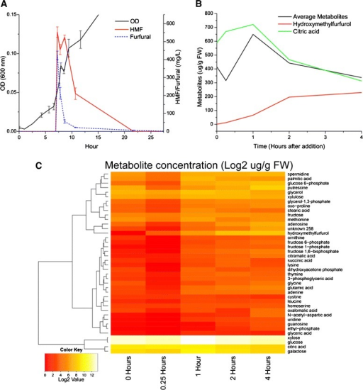 Inhibitor shock. A) Plot showing the addition of HMF and furfural in culture supernatants and the temporary disruption of growth. B) Plot showing the levels of intracellular citric acid and hydroxymethylfurfurol, as well as the average of all other metabolites. C) A heat map of a hierarchical clustering of the concentration of all monitored intracellular metabolites over the course of the 4 hour experiment.