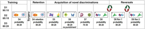 Probabilistic discrimination task. Illustrations of the stimuli used for each discrimination problem. D4 was performed immediately prior to surgery while all the other discriminations, including D4 retention, were performed after surgery.