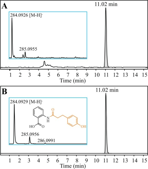 Detection of N-(4'-hydroxydihydrocinnamoyl)-anthranilate (DHavnD) from the recombinant yeast culture medium.Representative ESI-MS spectra were obtained after LC-TOF MS analysis of (A) the culture medium of recombinant yeast incubated with anthranilate and 4-hydroxydihydrocinnamate, and (B) a DHavnD standard solution.