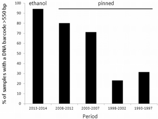 Frequency histogram of the percentage of samples for which a 550–657 bp COI barcode fragment was obtained.The left bar represents the ethanol preserved specimens (period 2013–2014), the other bars represent the pinned specimens (period 1993–2012).