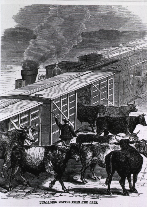 <p>Unloading cattle from the cars, at Communipaw drove yards, during the cattle plague.</p>