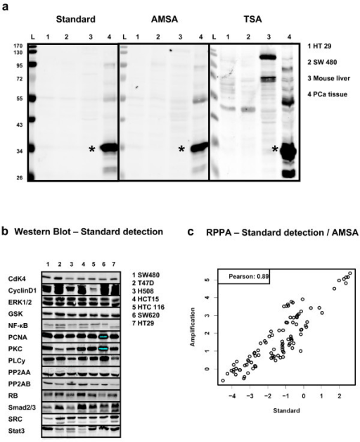 Comparing standard NIR detection and AMSA. (a) Western blot specificity of TSA and AMSA. Detection of PSA (star-symbol) using standard NIR procedure (scan intensity 5), antibody-mediated signal amplification (scan intensity 2.5) and TSA (scan intensity 2.5). Each lane corresponds to loading 5 μg total protein from prostate cancer tissue or PSA-free negative controls: Colon cancer cell lines HT29 (1), SW480 (2), mouse liver lysate (3), and prostate cancer tissue (4). (b) Western blot analysis of 14 proteins in seven human cancer cell lines with standard NIR detection. (c) Samples were analyzed by RPPA to compare standard NIR detection and AMSA using the same set of antibodies as shown for the Western blot. The correlation analyses were based on log signal intensities.