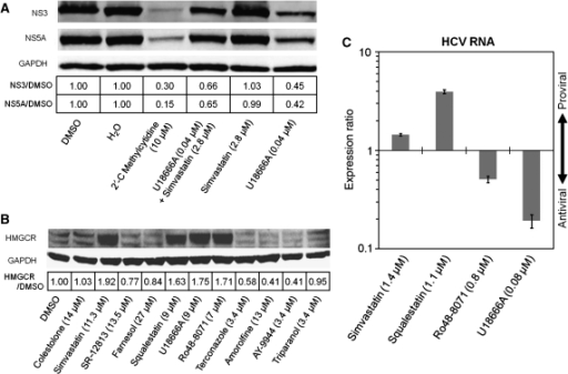 Validation experiments. (A) Evidence of epistasis at the level of HCV protein expression, after 96 h in Huh-luc/neo-ET replicon cells, between upstream-targeting simvastatin and downstream-targeting U18666A. Protein bands were quantified using densitometry and levels of expressed HCV proteins NS3 and NS5A are shown as ratios normalized to GAPDH. (B) Sterol pathway regulation revealed by HMGCR protein expression in HuH-7 cells 16 h after exposure to chemical inhibitors, showing feedback effects for probes targeting the upper end of the pathway. Antibodies specific for HMGCR and GAPDH were used to probe western blots of proteins separated by 10% Bis–Tris SDS/PAGE (see Materials and methods). (C) Confirmation that agents targeting the upper and lower pathway have respectively pro- and antiviral effects at 72 h in quantitative RT–PCR experiments on Huh-luc/neo-ET cells. Averaged expression levels from triplicate experiments were calculated after normalizing replicon copy number to total cellular RNA (see Materials and methods), and error bars show 95% confidence (two standard deviations).