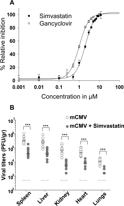 Effect of statins on mCMV growth in vitro and in vivo.(A) NIH/3T3 cells were infected with mCMV-GFP (MOI of 0.2) and subsequently treated with varying concentrations of Simvastatin or Gancyclovir immediately after infection. GFP expression was measured to monitor the level of infection (Materials and Methods). Graph represents the percentage of viral inhibition as a function of drug treatment. Data points represent mean ± SD of two independent experiments with six biological replicates for each experiment. (B) Mice were fed with simvastatin (50 mg/kg/mice) daily for 5 d by gavages and at day 1 post-treatment, were challenged with 2×106 PFU of mCMV by intraperitoneal injection, and sacrificed; at 4 dpi, viral titers in different organs were measured by plaque assay and are expressed per gram of tissue. Data points represent mean ± SD of two independent experiments with five mice per group for each experiment. *p<0.05, **p<0.01, ***p<0.001, determined with a Mann-Whitney U test.