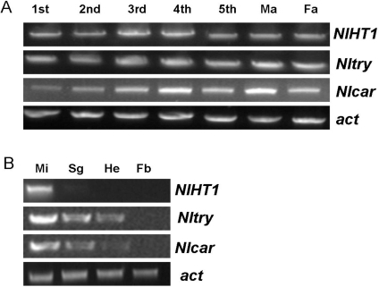 Transcription profiles of NlHT1, Nltry, and Nlcar at different developmental stages and in different tissues.(A) Transcript levels of the three genes in N. lugens developmental stages from 1st nymph to male adult (Ma) and female adult (Fa). (B) Transcript levels in tissues of N. lugens 3rd instar nymphs: midgut (Mi), salivary gland (Sg), fat body (Fb), and head (He).