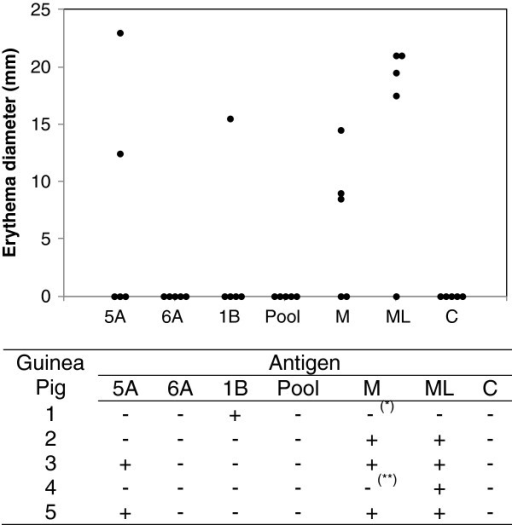 Delayed-type hypersensitivity response induced by peptides in guinea-pigs. Guinea-pigs were sensitized with 200 μg M. leprae in Freund's incomplete adjuvant and - after 30 days - were inoculated intradermally with peptides and controls. Each group contained five animals. The result in 48 hours after application of 10 μg peptides, Mistsuda lepromin (M) with 4 × 106 bacilli and 10 μg soluble extract of M. leprae (ML) is indicated. The peptide pool contain equimolar amounts of the three peptides. The diameter of the reaction corresponds to the average of horizontal and vertical diameters of the erythema. 0.9% NaCl (C) was used as negative control. * The animal responded after 72 hours. ** The animal responded after 21 days.
