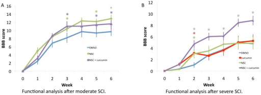 Stem cell therapy in conjunction with low-dose curcumin had a synergistic effect in recovery from severe SCI, as demonstrated by improved BBB score.A: Functional analysis (BBB) after moderate SCI showed that stem cell therapy with a high dose of curcumin rendered BBB scores, which were statistically significant as compared to control rats (DMSO), starting from week 3. B: In severe SCI, rats undergoing combined NSC transplantation and curcumin showed consistent improvement in BBB score as compared to DMSO treated controls. Statistical analysis of combined NSC+curcumin treatment also demonstrated significant improvement in comparison to NSC or curcumin treatment alone.