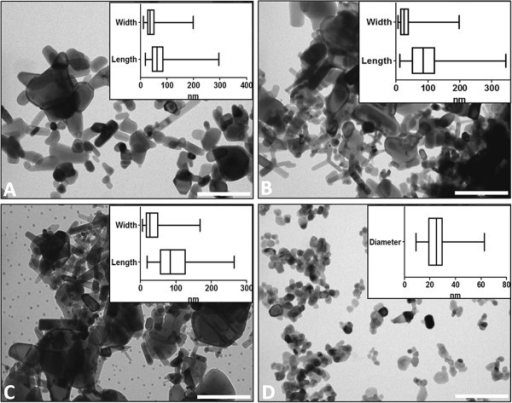 Nanoparticle morphologies and size distributions. TEM images of ZnO nanoparticles used in this study alongside boxplots showing the distributions of particle lengths and widths (A. Z-COTE; B. HP1; C. MAX) or diameter (D. Nanosun), depending on whether particles were mainly rod-shaped or spherical, respectively. 90–300 measurements were made for each dimension. The vertical line in the box represents the median value and the edges of the box represent the lower and upper quartiles. The whiskers at the ends of the horizontal lines represent minimum and maximum values. Scale bar for TEM images = 200 nm.