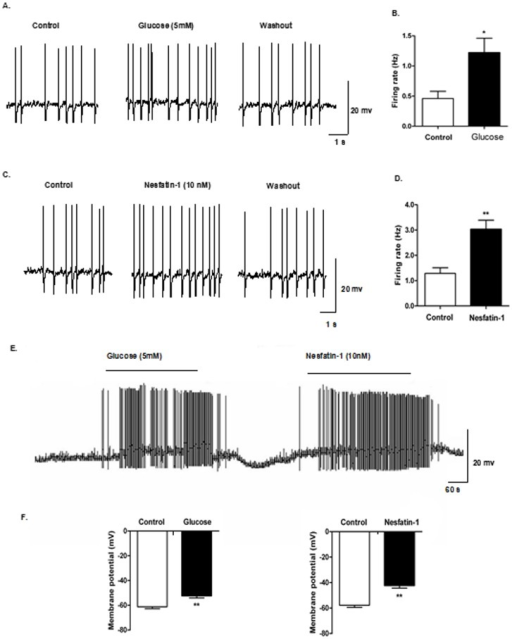 Nesfatin-1 increased excitability of GE-neurons in DVC.Current-clamp recordings from DVC neurons in slice preparation. (A) Identification of GE neurons in DVC. Representative raw traces of spontaneous action potentials were recorded before, during, and after application of glucose (5 mM), (B) Changes in firing rate after application of glucose. (C-D) Changes in firing rate after application of nesfatin-1 (10 nM). (E) Depolarizing responses to 5 mM glucose and 10 nM nesfatin-1 (horizontal bar). (F) Mean response to bath application of 5 mM glucose and 10 nM nesfatin-1.