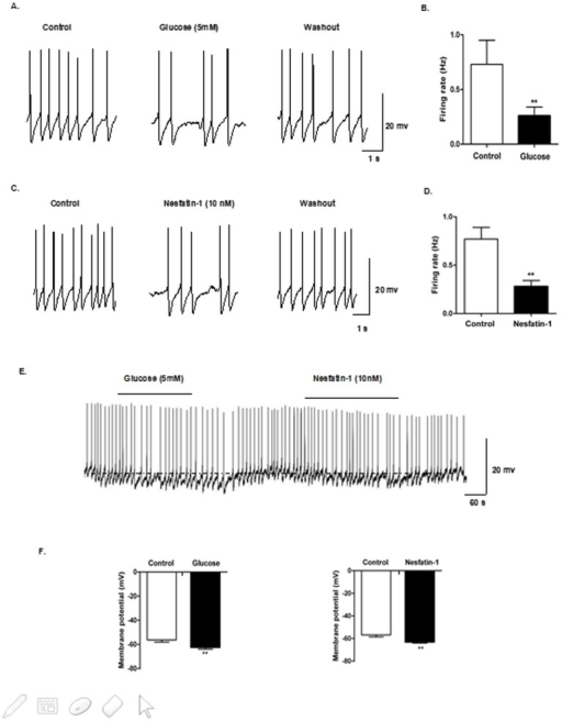 Nesfatin-1 decreased excitability of GI-neurons in DVC.Current-clamp recordings from DVC neurons in slice preparation. (A) Identification of GI neurons in the DVC. Representative raw traces of spontaneous action potentials were recorded before, during, and after application of glucose (5 mM), (B) Changes in firing rate after application of glucose. (C-D) Changes in firing rate after application of nesfatin-1 (10 nM). (E) Hyperpolarizing responses to 5 mM glucose and 10 nM nesfatin-1 (horizontal bar). (F) Mean response to bath application of 5 mM glucose and 10 nM nesfatin-1.