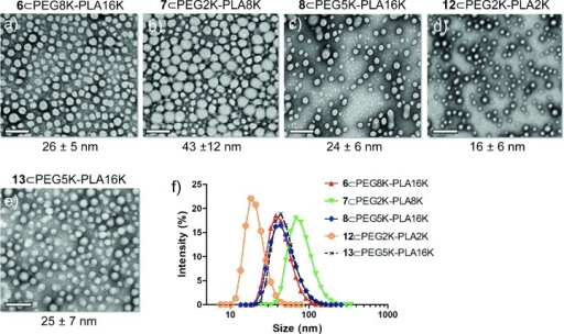 In vitro characterization of SN-38 prodrug-loaded polymeric nanoparticles. a–e) Transmission electron microscopic (TEM) images of SN-38 prodrugs 6-, 7-, 8-, 12-, and 13-loaded NPs (scale bars=100 nm). f) Size distribution of the prodrug-loaded NPs measured by dynamic light scattering (DLS). Except for 7- and 12-loaded NPs (with average dh≈82 and 20 nm, respectively), the formulations of 6, 8, and 13 produce a superimposable histogram with average dh of ca. 43 nm.