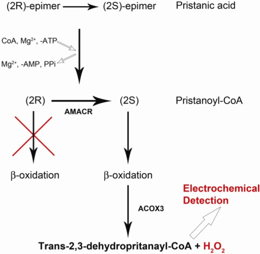 Pathway from Pristanic Acid to Pristanoyl-CoA then to producing H2O2.