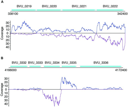 Read coverage plots for example genes in B. vulgatus. Genes are represented as arrows in the plots, and the read coverage curves are shown below the genes, with the coverage for sense and antisense reads shown in blue and purple, respectively. (A) Read coverage plot for an operon with four genes, shown as cyan arrows on the top: BVU_0219 is a putative aldo/keto reductase, BVU_0220 is a hypothetical protein, BVU_0221 is a putative fucose permease, and BVU_0222 is a putative sorbitol dehydrogenase. (B) Read coverage plot for BVU_3334 (and its neighboring genes): BVU_3334 is a putative transcriptional regulator, BVU_3333 is similar to a fructose-6-phosphate aldolase from E. coli, BVU_3332 is a putative ABC transporter permease, BVU_3335 is a hypotentical protein, and BVU_3336 is a putative glycosyl transferase.