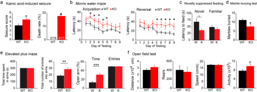 Rbfox3−/− mice exhibit increased seizure susceptibility and decreased anxiety.(a) Seizure scores and death rate for WT and Rbfox3−/− (KO) mice treated with kainic acid. The mortality rate of KO mice was 17.65%. Mann-Whitney rank sum test or Fisher's exact test, *P < 0.05, #P < 0.1; WT, n = 19, KO, n = 17. Behavior was measured for WT and Rbfox3−/− (KO) mice as follows: (b) Acquisition and reversal of spatial learning scores in the Morris water maze over 9 days of testing. Two-way repeated measures ANOVA with Holm-Sidak post hoc comparison, *P < 0.05; WT n = 11, KO, n = 9. (c) Stress-induced anxiety measurements using the novelty suppressed feeding test (WT = W. Rbfox3−/− = K). Student's t-test, two-tailed, *P < 0.05; W, n = 12, K, n = 8. (d) Abnormal behavior scored by number of marbles buried with the marble-burying test. Mann-Whitney Rank Sum test, *P < 0.05; WT, n = 12, KO, n = 9. (e) Anxiety-like behavior measured with the elevated plus-maze test. Student's t-test, two-tailed, **P < 0.01, ***P < 0.001; WT/W, n = 12, KO/K, n = 9. (f) An open field analysis of locomotion test also measured anxiety. Student's t-test, two-tailed, #P < 0.1; WT, n = 12, KO, n = 9.