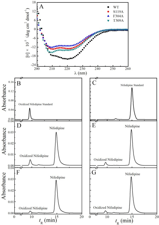The circular dichroism spectra and CYP3A29 and the mutants' nifedipine oxidation activities. (A) Far-UV CD spectra of CYP3A29 and its mutants. CD spectra were recorded at 20 °C and in 50 mM potassium phosphate buffer (200 mM KCl, 0.2 mM DTT, 1 mM EDTA, and 20% glycerol, pH 7.4). (B–G) The HPLC chromatogram of oxidized nifedipine standard; the HPLC chromatogram of nifedipine standard; HPLC chromatograms of nifedipine metabolized by WT, S119A, F304A, and T309A, respectively. HPLC eluent was monitored by absorbance at 254 nm.
