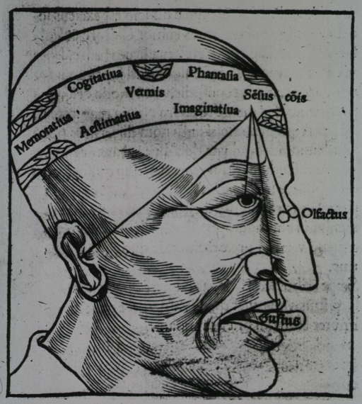 <p>A human head in profile with lines from the ear, the eye, nose, and tongue to a point on the forehead; a band around the head labels the areas of the brain that are vital to the memory, imagination, cognition and the senses.</p>