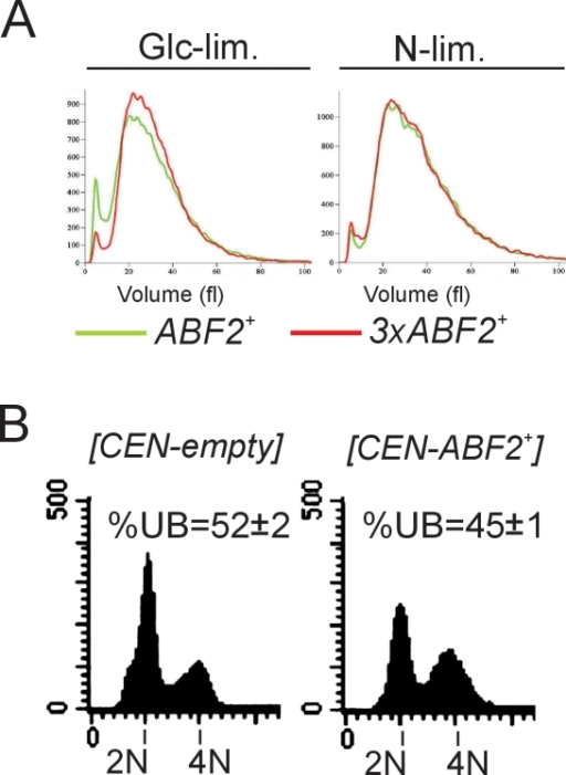 3xABF2+ cells do not have altered cell size in chemostat cultures.A, The cell size of the indicated cell populations was measured from the same chemostat experiments described in Figure 1B, using a channelyzer. Cell numbers are plotted on the y-axis and the x-axis indicates size (in fl). B, Moderate over-expression of ABF2 from a low-copy CEN plasmid promotes cell cycle progression. The DNA content of the indicated strains is shown.