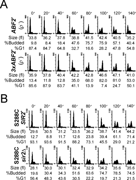 mtDNA is required for the accelerated DNA replication in 3xABF2+ cells.A, Cell cycle progression of elutriated cells was analyzed exactly as in Figure 4, except that the strains used were made ρ− as described in the Methods. B, Loss of SIR2 accelerates DNA replication in the S288C strain background. The elutriation experiment was done as in Figure 4, except that the strains used were in a different strain background, described previously [14].