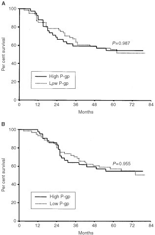 Disease-free survival (A) and overall survival (B) of gastric cancer patients according to P-gp expression.