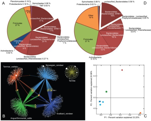 Microbial community analysis of the Svalbard reindeer rumen microbiome and comparison with microbiomes from other selected gut environments.(A) Diversity and relative abundance of the most abundant bacterial taxa identified in the rumen of the Svalbard reindeer based on phylogenetic analysis of 16S rRNA genes. (B) OTU network map showing OTU interactions between all rarefied samples from the Svalbard reindeer, Norwegian reindeer feeding on a commercial feed, Tammar wallaby, rumen and termite. OTUs are represented by dots and dot sizes reflect sequence counts within the OTU. Dot colour indicates the number of microbiomes in which the OTU was found (1 =  white, 2 =  yellow, 3 =  orange, 4 =  red). The lines radiating from each of the five grey dots link the OTUs to their source microbiomes: Svalbard reindeer, dark blue (this study); Norwegian reindeer, light blue (this study; dataset included for comparative purposes only); Termite_PL3, yellow [4]; bovine, green [6]; Tammar wallaby, orange [5]. (C) Principal coordinate axes (PCoA) for the unweighted UniFrac analyses are coloured by host animal; Svalbard reindeer (2 samples: ▸▴) dark-blue; Norwegian reindeer (2 samples: ♦♦) light-blue; bovine rumen (•) green; Tammar wallaby (◂) red; termite (▪) orange. (D) Composition of the Svalbard reindeer rumen metagenome sequence dataset, based on sequence composition-based binning of 1394 assembled scaffolds (∼5.4 Mb) using PhyloPythiaS. For a complete rrs inventory and comparisons between the two Svalbard reindeer samples at an OTU definition of 97% ID see Table S1.