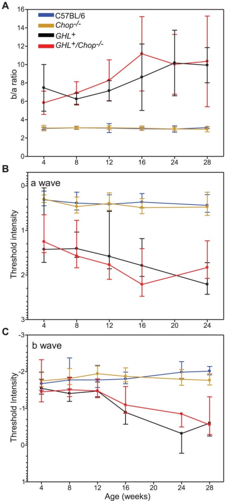 Age related changes in retinal function and sensitivity of GHL+ and GHL+/Chop−/− mice.(A) b/a wave ratio in C57BL/6, Chop−/−, GHL+, and GHL+/Chop−/− mice. (B and C) Age related changes in a- and b-wave threshold intensities in C57BL/6, Chop−/−, GHL+, and GHL+/Chop−/− mice (a- wave It = 50 µV, b- wave It = 75 µV). Error bars: ± SD.