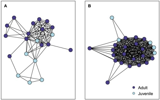 Indiana bat (Myotis sodalis) social network maps.Single-mode social network map of an Indiana bat maternity colony in Pickaway County, Ohio, USA, 2009 (A) and 2010 (B). Map projected from the two-mode network of bats and roosts. Nodes are colored by age class.