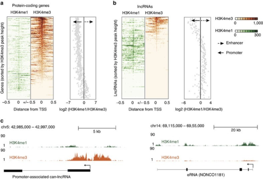 LncRNAs can be distinguished by canonical promoter and enhancer chromatin signatures.(a) H3k4me3 and H3K4me1 binding across a 1 Kb interval centred on the transcription start site of expressed protein-coding genes. Profiles are sorted based on the height of the H3K4me3 peak. Also provided is a plot of the H3K4me1/H3K4me3 log2(ratio) at each TSS (mean over interval). (b) H3k4me3 and H3K4me1 binding across a 1 Kb interval centred on the transcription start site of differentially expressed lncRNAs. Profiles are sorted on the height of the H3K4me3 peak. Also provided is a plot of the H3K4me1/H3K4me3 log2(ratio) at each TSS (mean). (c) Example of a lncRNA with a canonical promoter-like chromatin signature (can-lncRNA, left) and a lncRNA with an enhancer signature (eRNA, right). Figures were produced using the UCSC genome browser.