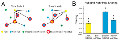 (A) Neurons were classified as hubs, non-hubs, or unconnected neurons at all time scales (10 discrete time scales ranging logarithmically from 0.05 – 3 ms to 0.75 – 3 s). (B) Hub neurons function as hubs at isolated time scales, while non-hubs operate at many time scales. Null model: chance sharing with matched number of hubs, non-hubs, and unconnected neurons (i.e. independent networks instead of multiplex networks). Significance of sharing values was assessed with a multiple comparison corrected Mann-Whitney test (1, 2, and 3 dots: p < 0.05, 0.01, and 0.001).