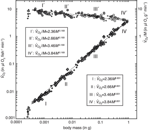 Ontogenetic changes in the rate of respiration (, diamonds) and the mass-specific rate of respiration (, circles) with increase of body mass (M) in Japanese flounder.Symbols for  indicate the two methods of respirometry (open: closed method and solid: semi-closed method). Symbols for  signify the year in which data were collected (open: 2005 and solid: 2006). The vertical broken lines at around 0.0003 g represent  and  which increased daily from just after hatching to 7 days after hatching, with virtually no increase in body mass. Ranges covered by the four solid lines each for  and  indicate intragroup phases of negative allometry. The broken lines both on  and  represent the intergroup lines. Small symbols represent values during the transitional phases. Regression analysis of each line for  is presented in Table 1, and ANCOVA in Table 2.