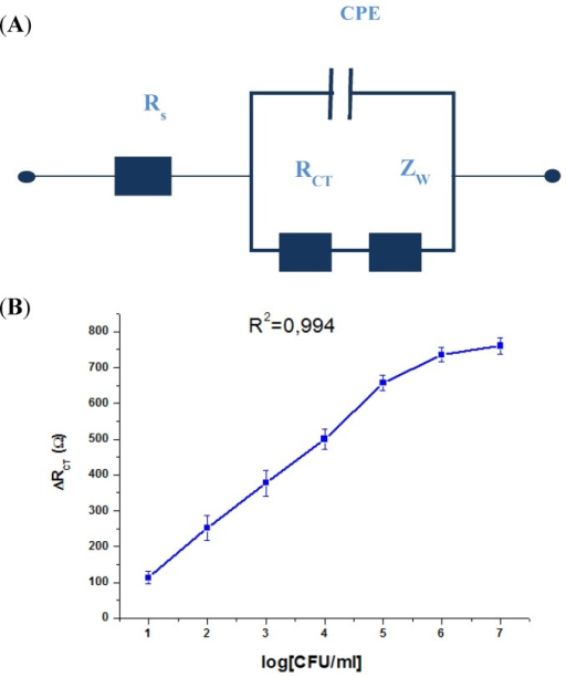 (A) The applied equivalent electrical circuit, and (B) variation of the RCT with the logarithmic concentration of S. aureus.