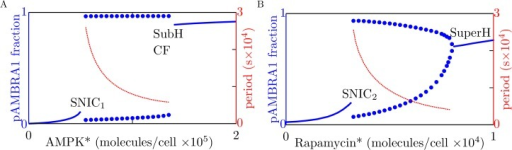 Results from bifurcation analysis of the system with negative feedback from ULK1 to AMPK.The solid blue curves indicate stable steady-state levels of AMBRA1 phosphorylation for (A) different levels of AMPK* and (B) different levels of rapamycin*. The dotted curves indicate lower and upper bounds of stable limit cycles. The red curves indicate periods of oscillation (see right vertical axes). In the left panel, the level of rapamycin* is held fixed at zero. In the right panel, the level of AMPK* is held fixed at 30,000 copies per cell. For both panels, the parameters considered in Table 1 are held fixed at their nominal values. The labels SNIC1 and SNIC2 indicate saddle-node-on-invariant-circle bifurcation points, and the label SuperH indicates a supercritical Hopf bifurcation point. The labels SubH and CF refer to subcritical Hopf and cyclic fold bifurcation points, which are very close to each other (panel A).
