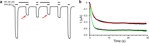 Isoflurane binding stabilized the closed channel.(a) A representative trace showing that pre-incubation with isoflurane (red arrows) slowed the onset rate and increased the maximum inhibition. The vertical and horizontal scale bars represent 20 μA and 30 seconds, representatively. (b) The onset rate of the channel current can be fitted to a single exponential decay function, I = Imax (1−e(−t/τ)). The fitting results for the onset rate τ and Imax for channels pre-incubated with isoflurane (red line) are 1.73 ± 0.04 s and −0.33 ± 0.02 μA, respectively; and 1.25 ± 0.05 s and −0.41 ± 0.03 μA, respectively, for channels without isoflurane pre-incubation (green line). The fitting parameters are expressed as mean ± SEM (n = 15).