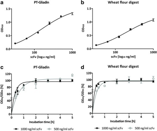 Purified scFv detects PT-Gliadin and natural wheat flour digest. a. ScFv binds to PT-Gliadin in a concentration -dependent manner. Purified scFv was diluted in indicated concentrations and binding was assessed by ELISA as described in Methods. Data shown are OD (450 nm) values and represent mean values (+/− SEM) of triplicates. b. Purified scFv binds to natural wheat flour digest in a concentration -dependent manner. Purified scFv was diluted in indicated concentrations and binding was assessed by ELISA as described in Methods. Data shown are OD (450 nm) values and represent mean values (+/− SEM) of triplicates. c. ScFv binding reaches approximate equilibrium after 3 h incubation time. Two single chain concentrations (500 and 1000 ng/ml respectively) were incubated for indicated time and binding to (c). PT-Gliadin or (d). wheat flour digest was assessed by ELISA as described in Methods. Data shown represent OD (450 nm) values at different incubation times compared to the OD (450 nm) value after 3 h (ODx/OD3h *100). Mean values (+/− SEM) of triplicates are shown