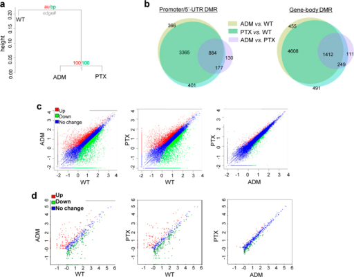 Generation of comparative profiles of DNA methylation, mRNA and miRNA expression.(a) Hierarchical clustering of the methylation status in MCF-7/ADM, /PTX, and /WT cells. (b) Venn diagrams of the DMRs of the three comparison groups. (c,d) Scatter-plots of the differentially-expressed mRNAs (c) and miRNAs (d). Fold-changes of mRNAs and miRNAs are shown on the X or Y axis as Log (fold-change value).