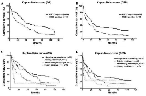 Survival curves showing the correlation between MBD2 and OS or DFS following resection. Kaplan-Meier curve showing (A) OS and (B) DFS of patients with HCC post-resection with/without MBD2 expression. The OS (P=0.002) and DFS (P=0.006) are significantly different in MBD2 negative and postive patients. Kaplan-Meier curve showing (C) OS and (D) DFS of patients divided into four groups dependent on the level of MBD2 expression. There is a significant difference in OS between the negative staining and moderately positive staining groups (P<0.001), the negative staining and highly positive staining groups (P=0.008) and the faintly positive staining and the moderately positive staining groups (P=0.034). There is significant difference in DFS between negative staining and moderately positive staining (P=0.002), negative staining and highly positive staining (P=0.025). MBD2, methyl-CpG binding domain 2; OS, overall survival; DFS, disease free survival; (−), negative staining; (+), faintly positive staining; (++), moderately positive staining; and (+++) highly positive staining.