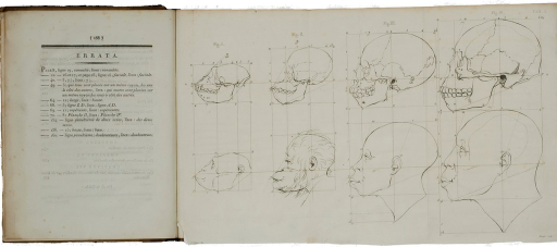 <p>Image of page 168 (errata text only) and facing folded sheet of drawing showing evolutionary development of primate head and skull from Petrus Camper's Dissertation.</p>