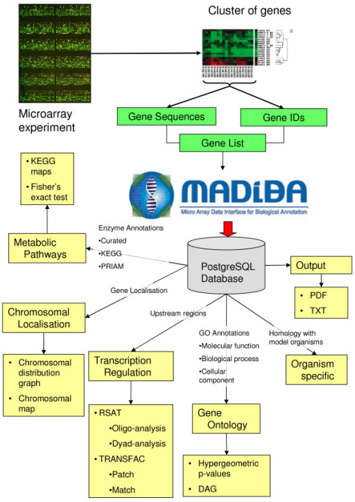 A schematic representation of the flow of data through MADIBA. After a microarray experiment, data are normalised and then clustered, since it is hypothesised that the genes in a cluster have common biological implications. A cluster of genes is submitted to MADIBA, either as nucleotide sequences, or gene identifiers. This list of genes can then be subjected to five analysis modules – Gene Ontology Analysis, Metabolic Pathways Analysis, Transcription Regulation Analysis, Chromosomal Localisation Analysis and an Organism Specific Analysis. Also shown are the data that are required by each of the analysis modules. The results from the analyses can be exported as a PDF file, or as plain text.