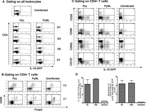 CD127low Foxp3− CD4+ T cells that do not constitutively express CD25 are the major source of IL-10 during P. yoelii infection.Transgenic, IL-10-GFP knockin tiger mice were infected with PyL or PyNL. (A) Splenic lymphocytes from infected or uninfected control mice were analysed for expression of CD4+ and GFP. (B,C) 7 days post infection, splenic CD4+ T cells were analysed for (B) expression of CD25 and Foxp3, or (C) GFP (IL-10) and CD25, CD69, CD62L or CD127. (D) The frequency and number of GFP+ (IL-10+) CD4+ T cells was calculated 7 days post infection in infected or uninfected mice. Groups consisted of 3–5 mice and the results are representative of 2 independent experiments.