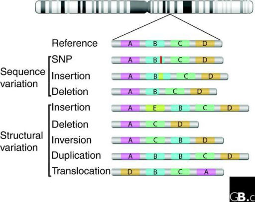 an analysis of the dna sequence of humans The dna sequence, annotation and analysis of human chromosome 3 accepted for publication in nature,  human genome sequencing center, baylor college of medicine.
