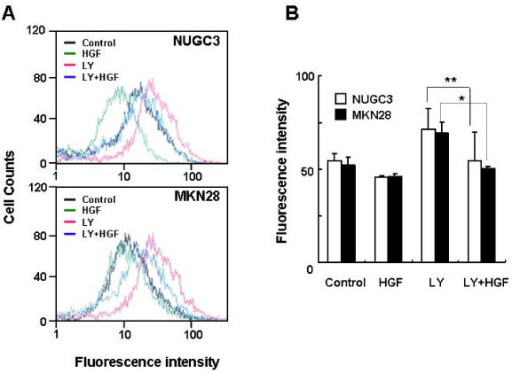 Effects of LY 294002 on ROS accumulation. Serum-starved cells were pretreated with LY 294002 (10 μM) for 30 min and then treated with HGF (10 ng/ml). The intensity of DCF fluorescence was measured with flow cytometry (A). Mean fluorescence intensity was obtained from 3 independent experiments and plotted (B). Representative data from three independent experiments are shown. Values are the means ± SD of three independent experiments. Statistical significance was estimated by Student's t-test (*, p < 0.05; **; p < 0.01).