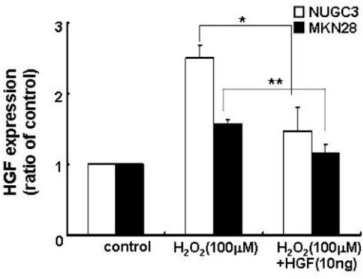 Level of expression of HGF after treatment with H2O2 and/or HGF. Cells were serum-starved and treated with H2O2 (100 μM) and/or HGF (10 ng/ml). The level of HGF mRNA was measured by real-time RT-PCR analysis. Values are the means ± SD of triplicates of three independent experiments. Statistical significance was estimated by Student's t-test (*, p < 0.05;**, p < 0.01).