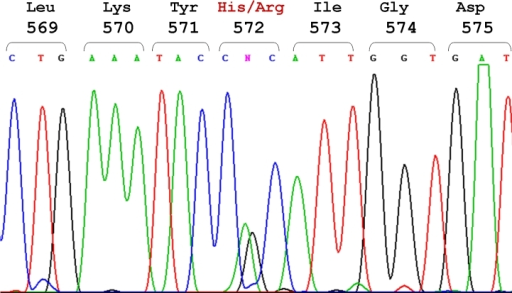 Direct sequencing of exon 13 of the TGFBI gene in the proband of Family Three (individual I-1). The DNA sequence around the codon for histidine 572 (CAC) of the TGFBI gene is presented. The sequence shows a heterozygous, single-base A→G transition at nucleotide 1762, resulting in the replacement of histidine (CAC) with arginine (CGC) (H572R). The codon numbers and the amino acid sequence are indicated at the top of the figure.