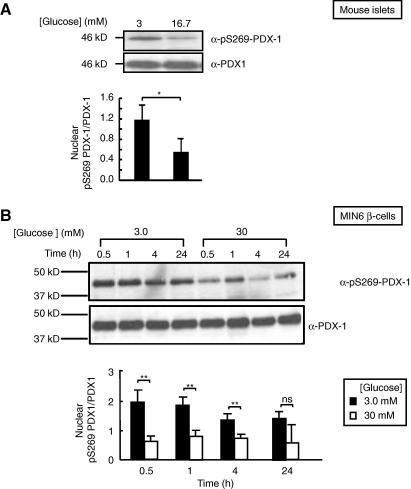 oncogenic kras maintains pancreatic tumors through regulation of anabolic glucose metabolism