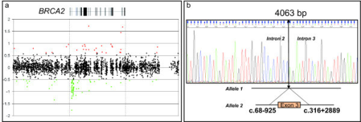 Genomic analysis of the Δ3 BRCA2 large rearrangement. a: Dedicated BRCA2 CGH array. The gene is represented at the top, with vertical boxes that indicate exon positions and sizes. Black plots are considered to be within the diploidy range (the y axis gives the log2 intensity ratios). The green dots indicate signals that were below the threshold for deletion (-0.4 log2 ratio). b: Sequence analysis of the smaller PCR product obtained by long-range PCR of proband DNA with the exon 3 large rearrangement in BRCA2 (Hg18/build36, 2006). The sequence crosses the breakpoint that begins in intron 2 and ends in intron 3.