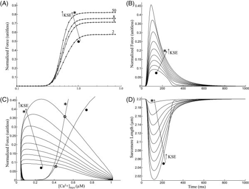 Isometric contraction. Twitch response - Isometric contraction. The cell is held at a constant total length but the sarcomere is allowed to contract via a series elastic element. (A) Steady state F-Ca relationships for increasing KSE values. (B) Traces for total muscle force during an isometric twitch with KSE values of 1(∙), 1.4, 2, 3, 4, 5, 7, 10 and 50 (∗) where units of KSE are normalized force-per-micrometer extension. (C) phase plots of self normalized force versus [Ca2 + ]myo for increasing KSE values (corresponding to panel B) overlayed with two steady state F-Ca relationships corresponding to KSE = 1.0 (∙) and 50.0 (∗). (D) Sarcomere length traces showing internal shortening. Model generated data corresponds to an idealized rat ventricular myocyte at 22.5°C.