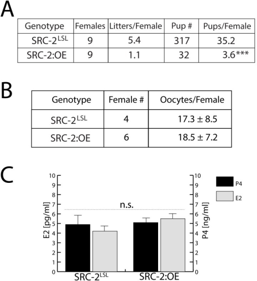 The SRC-2:OE mouse exhibits a severe subfertility defect.(A) A six-month breeding study reveals that the SRC-2:OE female mouse is severely subfertile. (B) SRC-2LSL and SRC-2:OE mice produce similar numbers of oocytes following sequential PMSG and hCG hormone treatments (see: Materials and Methods). (C) Similar levels of E2 and P4 are found in the serum of the SRC-2LSL and SRC-2:OE mouse.