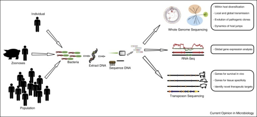 Schematic diagram summarizing the applications of high throughput sequencing for studies of the epidemiology, evolution and pathogenesis of bacterial infections.